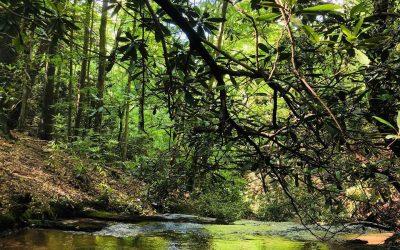 Tamarca Hollow: A Nature Retreat
